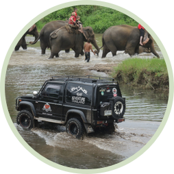 4x4 elephant tours in jungle